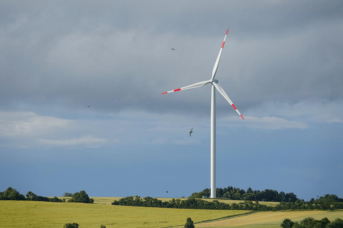 Windräder und Rotmilan